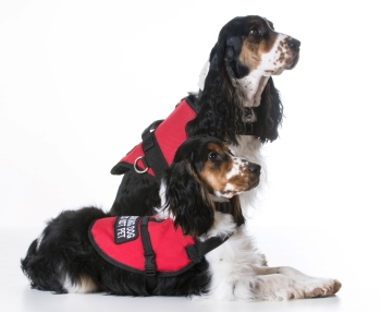 Medical detection dogs: how they could save our lives in a sniff